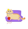 queen cat lying on the sofa with red ball in paws vector image vector image
