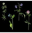 set watercolor drawing wild flowers vector image vector image