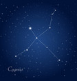cygnus constellation vector image
