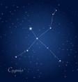 cygnus constellation vector image