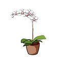 flowering orchid in a clay pot element of home vector image vector image