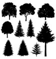Forest coniferous and deciduous fir trees