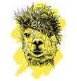 lama hand drawn print for t-shirts vector image