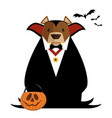 brown bear in a halloween dracula costume vector image