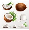 coconut realistic set vector image