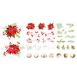 red poinsettia christmas flowers winter vector image