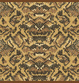 abstract python snake skin wallpaper vector image vector image