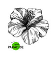 hand drawn sketch tropical paradise plant vector image vector image