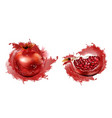 pomegranate whole and slice with seeds isolated vector image vector image