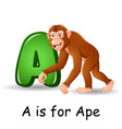 animals alphabet a is for ape vector image vector image
