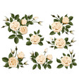 cream colored rose boutonniere set vector image