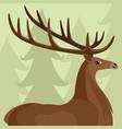 deer with beautiful horns vector image