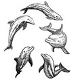 ink hand drawn dolphin icon set vector image vector image