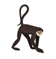 monkey with tail vector image vector image