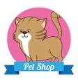 pet shop vector image vector image