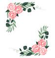 ranunculus flower vector image