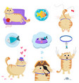 set of cute cat in different life situations vector image