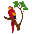 cartoon macaw on tree branch vector image vector image