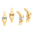 icons of joints and bones vector image vector image