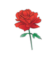 Rose light red vector image vector image