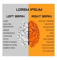 brain side function vector image