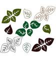basil leaf herb outline