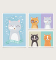 cute cats pet differents character feline vector image