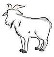 goat drawing on white background vector image vector image