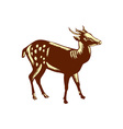 Philippine Spotted Deer Woodcut vector image vector image