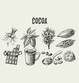 hand drawn sketch cocoa chocolate product set vector image vector image