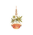 hanging house plant in ceramic pot elegant home vector image vector image