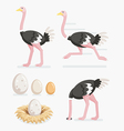 ostrich and eggs on nests flat design vector image
