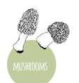 Set with black and white mushrooms vector image vector image