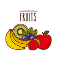 tropical fruit design vector image vector image