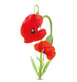 3d realistic red poppies flowers beautiful