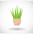 aloe vera plant in pot flat icon vector image vector image