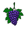 grape branch on white background design element vector image