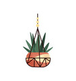 hanging potted green house plant element vector image vector image