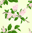 Seamless texture pink Lilac branch vector image vector image