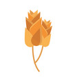 spikelets wheat bakery flat icon design vector image