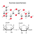 Structural chemical formula and model of sucrose vector image vector image