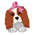 puppy cavalier king charles spaniel hand drawing vector image