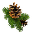 a branch of pine with two cones high detailed vector image