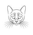engraving stylized cat portrait on white vector image vector image