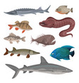 flat set of different predatory fishes vector image