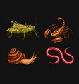 vintage insects pets in house scorpion snail vector image vector image