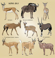 a set of realistic african antelope vector image