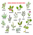 best herbal remedies for canker sores vector image vector image