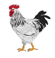 black and white rooster vector image vector image