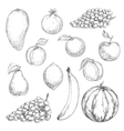 Fresh fruits sketches for food design vector image